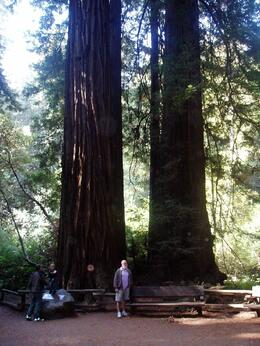 My husband standing in front of some Redwood trees to show the scale of the trees., Wendy D - September 2007