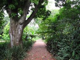 Walking through Durban's Botanical Garden. - February 2010