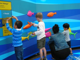 Cute interactive exhibit where you see how fish fins determine speed, Melissa H - May 2013