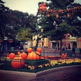 Pumpkins at disney , Amna A - October 2013