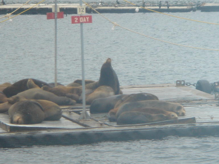 San Diego Seal Tour photo 14