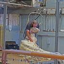 4-Night Murray River Cruise by Classic Paddle Wheeler PS Murray Princess, Adelaida, AUSTRALIA