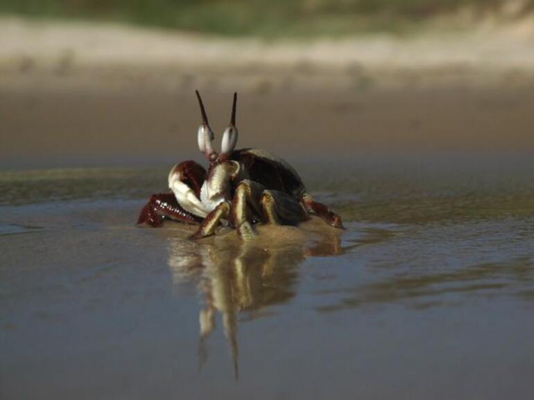 Beach life 3, Byron -