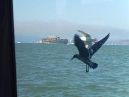 Alcatraz in the distance and two seagulls performing for me, it just couldn't et any better., Mandy D - October 2007