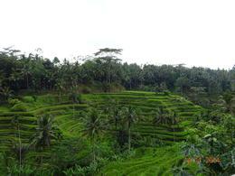 Terrestrial farming of Rice , satish chandra - November 2014