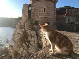 Relaxing with a new friend in Budva before driving back to Dubrovnik , brown.a.mack - November 2017