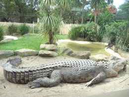 Sieste du crocodile , Jean-Pierre V - April 2015