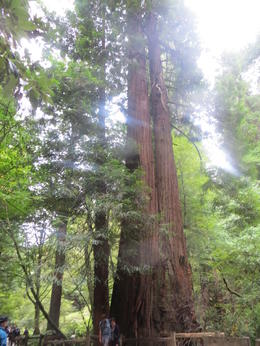 Muir Woods , Colby D - September 2014