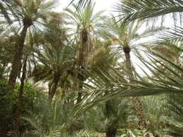 Beautiful palm grove! , francoise s - April 2015
