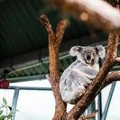 Billete de entrada estándar al Zoo de Taronga de Sídney y Australia Salvaje, Sidney, AUSTRALIA