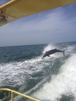 Einige Delfine and quot;spielten and quot; in den Bugwellen! , Sabine A - September 2014