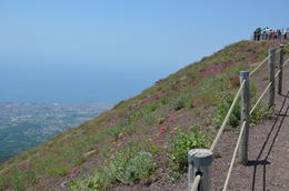 Beautiful view of wild flowers, Naples, and the sea. , Jay T - August 2014