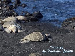 The turtles were awesome! , lovelaer - July 2017