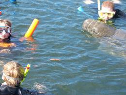 notre manatee veut un autre bisou , Cyril S - January 2012