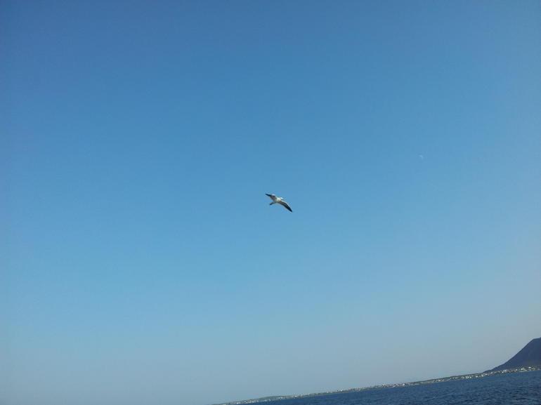 Albatros - Cape Town