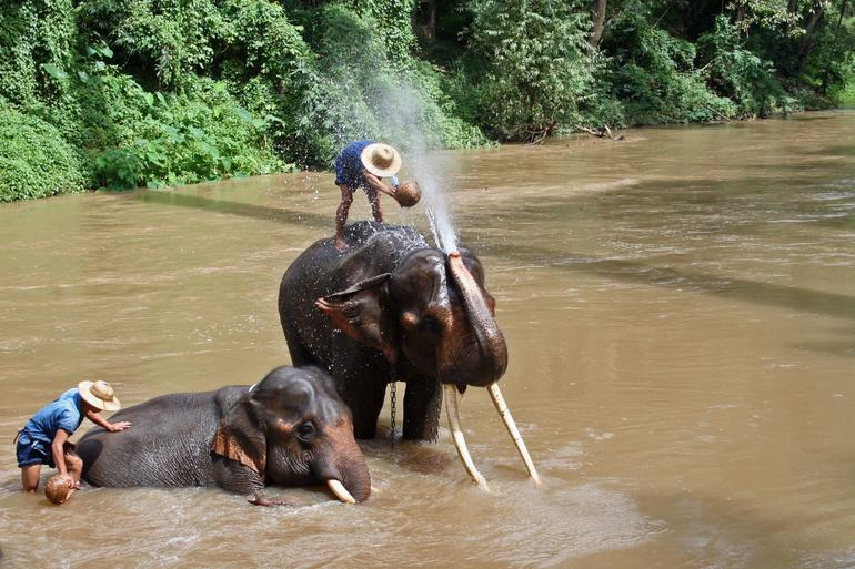 Chiang Dao Thailand Elephant Trek - Chiang Mai