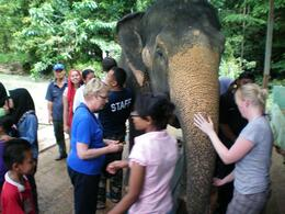 Feeding the elephants at the sanctuary - November 2008