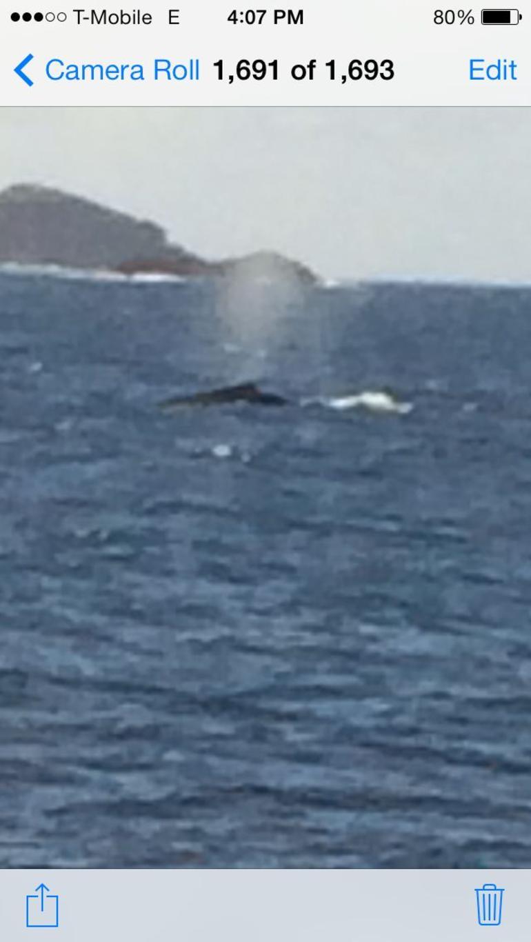 Humpback Whale - San Juan