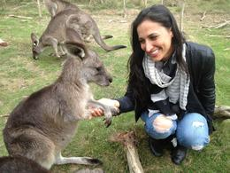 Playing with Kangaroos, Asha & Brock - July 2013