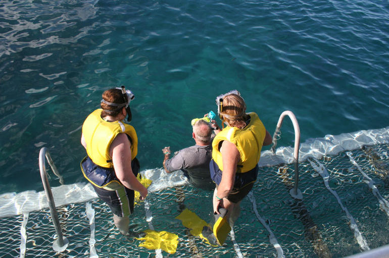 Snorkeling, Great Barrier Reef - Cairns & the Tropical North