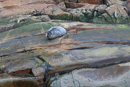 Baby seal that our boat crew spotted resting on the rocks. , Jill T - October 2017