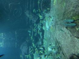 Visited Atlantis While On Vacation in Nassau Bahamas , cash - June 2014