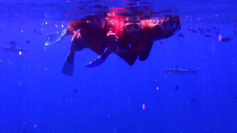 Bora Bora Snorkel, Shark and Ray Feeding Excursion - Bora Bora
