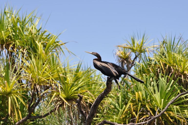 Dart Bird - Darwin
