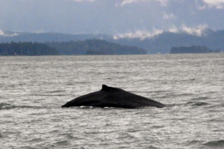 Fin - July 22, 2009 - Juneau