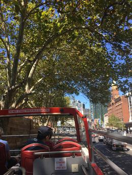 The view from the top of the double decker bus! (Watch for low hanging branches...!), Matthew G - March 2017