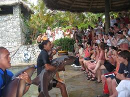 Ocean World: The instructors putting on a show for the crowd before we got to swim with the sharks - September 2011