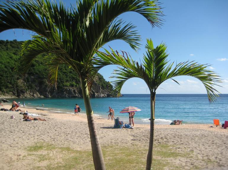 Shell Beach palm trees - Philipsburg