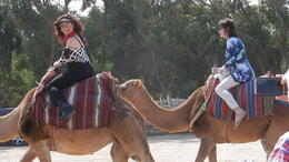 A ride on a camel , Janet H - October 2017