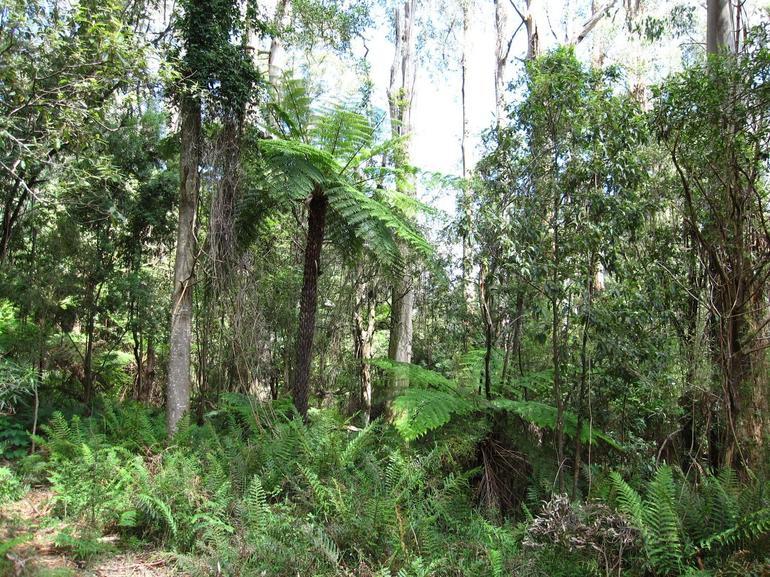 Dandenong Ranges National Park 2 -