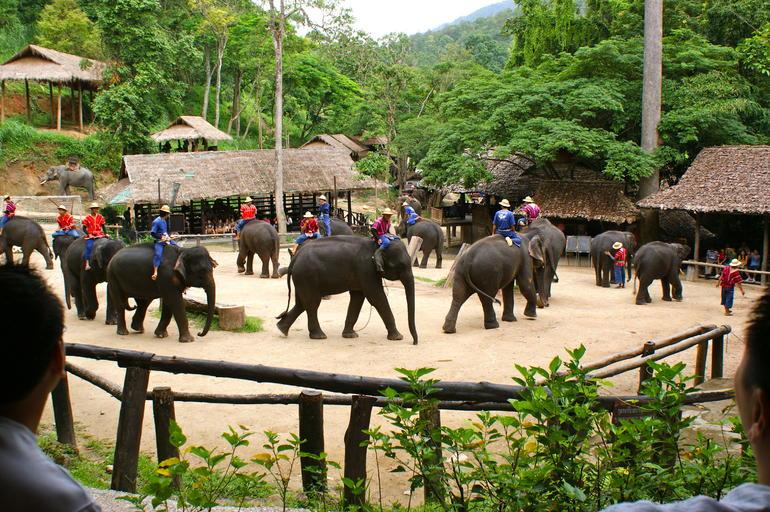 Elephants - Chiang Mai