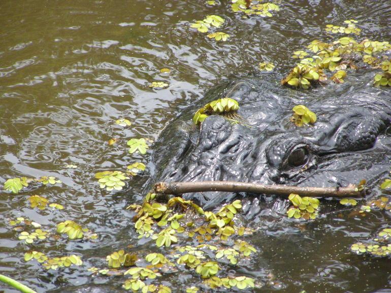 Gator! - New Orleans