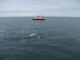 Whale just surfaced , David S - April 2014