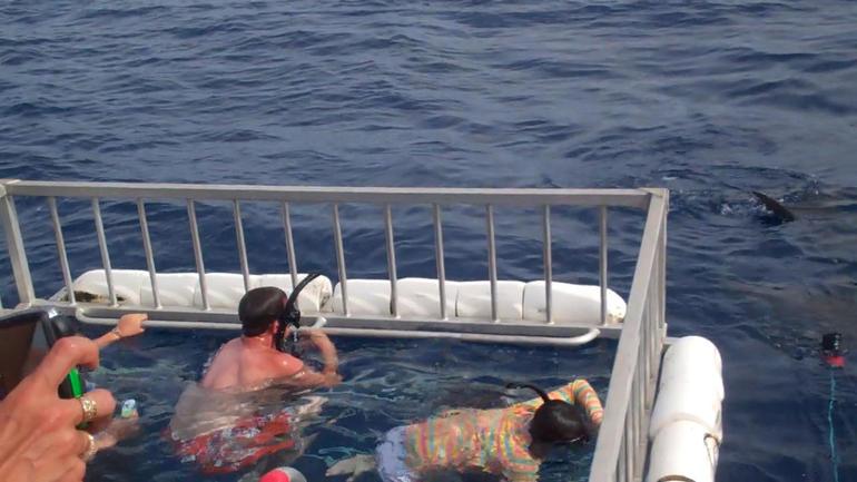 Oahu Shark Dive - Oahu