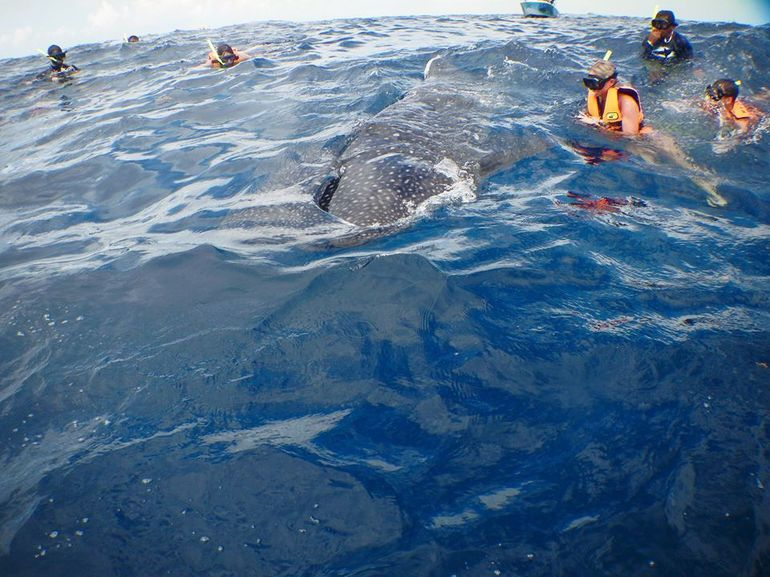 Whale Sharks tour in Cancun & Riviera Maya: Small-Group Eco Friendly photo 13