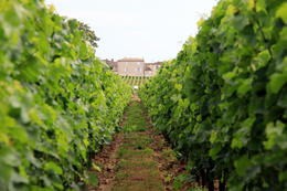 Exploring the vineyards and cellars. , Monique S - August 2014