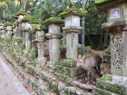Kasuga Shrine, Nara , Connie S - November 2017
