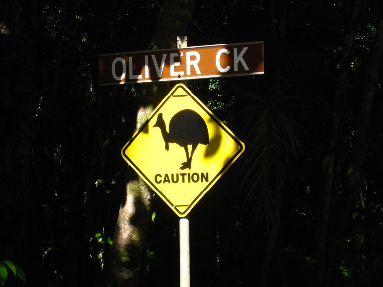 Cassowary! - Cairns & the Tropical North
