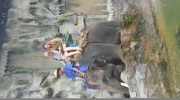 This was a great little ride. Our guide was extremely cranky and forced us to give him tip money. But, the elephants were why we were there. , Sara M - January 2016