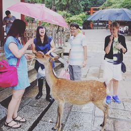 Feeding Deer at Nara Park , Elisha P - November 2015