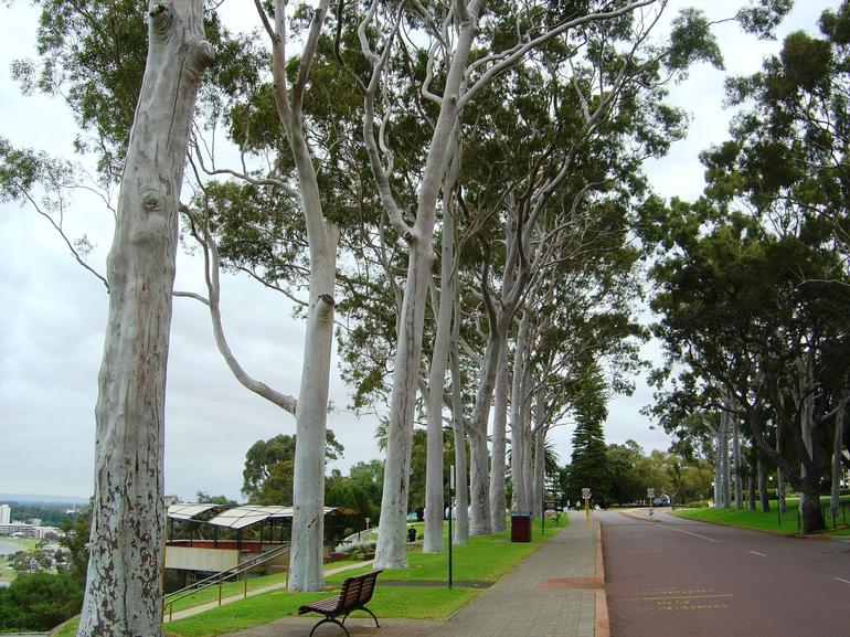 King's Park - Perth