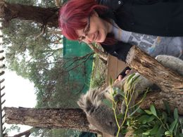 Koala experience at Moonlight Sanctuary , Jessica R - July 2016
