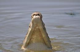yellow river, over 250 salt water crocs live here!, KAREN M - October 2009