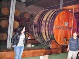 The basement of winery where port and other wines is matures in oak barrels , Michael R - May 2015