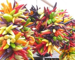 Beautiful chiles at Pike Place Market, Undercover Américan - October 2010