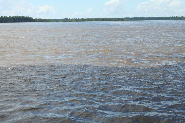 Rio Negro Cruise from Manaus to the Amazon River photo 21